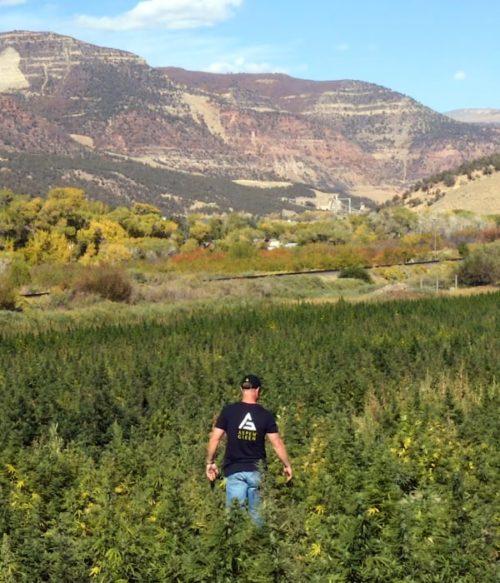 Brandon Lewis walking in Colorado hemp field